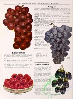 grapes-00015 - 044-Grapes, Raspberries [3019x4058]
