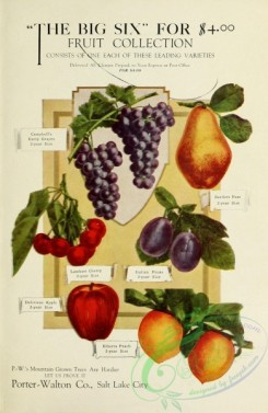 grapes-00016 - 003-Cherry, Apple, Grapes, Prune [2105x3232]
