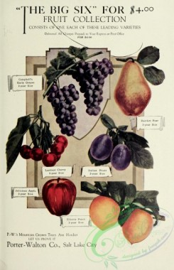 grapes-00017 - 081-Grapes, Apple, Peach, Plum, Pear, Cherry [2071x3204]