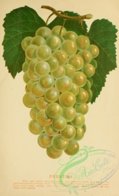 grapes-00026 - 059-Grape [2028x3318]