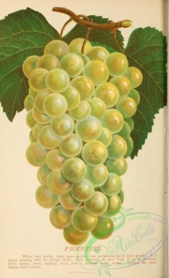 grapes-00030 - 096-Grape [1862x3037]