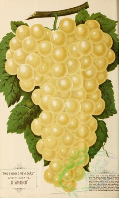 grapes-00038 - 086-Grape [1925x3188]