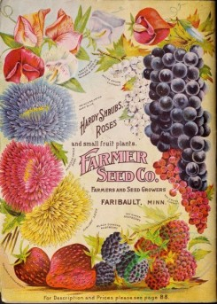 grapes-00083 - 033-Aster, Sweet Pea, Grapes, Currant, Raspberry, Strawberry [3084x4304]