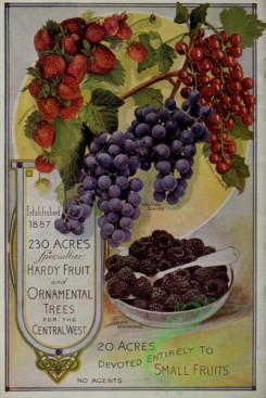 grapes-00112 - 069-Strawberry, Grapes, Blackberry [3231x4823]
