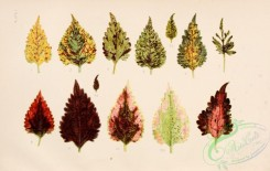 herbarium-00001 - Leaves, 1 [3680x2334]