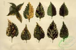 herbarium-00006 - Leaves, 3 [3492x2286]