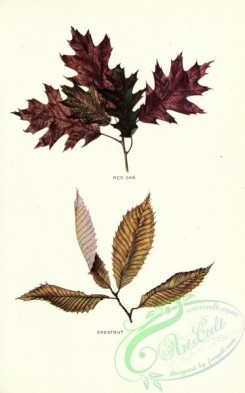 herbarium-00033 - Red Oak, Chestnut [2682x4294]