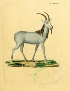 hoofed-00343 - Necklace-Goat [2357x3051]
