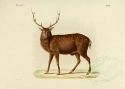 hoofed_best-00086 - North China sika deer, 2 [3486x2479]