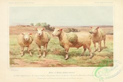 hoofed_cattlefarm-00069 - Sheep