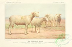 hoofed_cattlefarm-00106 - Sheep