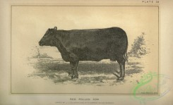 hoofed_cattlefarm-00521 - black-and-white 025-Red Polled Cow