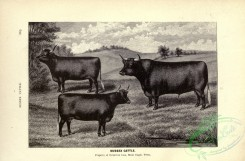 hoofed_cattlefarm-01005 - black-and-white 037-Sussex Cattle
