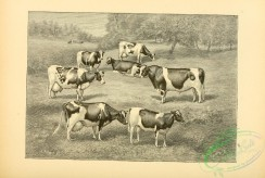 hoofed_cattlefarm-01231 - black-and-white 129-Cows