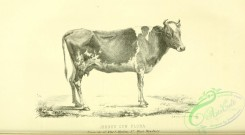 hoofed_cattlefarm-01376 - black-and-white 108-Jersey Cow