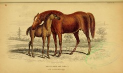 horses-00003 - BROOD MARE AND 3D FOAL qith marks of Quagga [3124x1871]