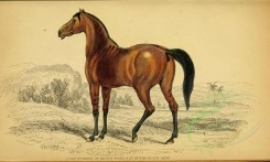 horses-00004 - COLT 3D ISSUE OF BROOD MARE & 2D BY BLACK ARAB [3124x1871]