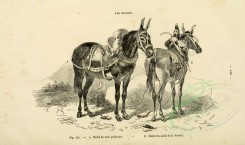 horses-00033 - Ass, 050 (black-and-white) [3600x2126]