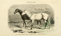 horses-00034 - Horse, 001 (black-and-white) [3600x2126]