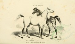 horses-00049 - Horse, 016 (black-and-white) [3600x2126]