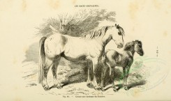 horses-00060 - Horse, 027 (black-and-white) [3600x2126]