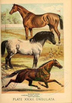 horses-00085 - Running Horse, Clydesdale Cart Horse, Trotting Horse [2309x3294]