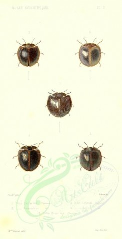 insects-00021 - nilio [1693x3298]
