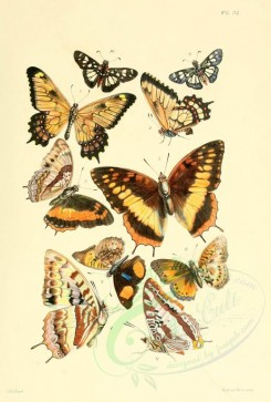 insects-00342 - 034-lepidoptera, euryades, charaxes, junonia, hesperia [2054x3038]