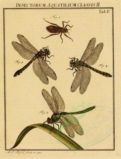 insects-02259 - 025-Water Insects, Dragonfly [1711x2244]