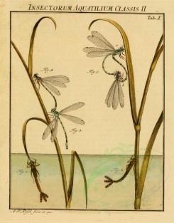 insects-02264 - 030-Water Insects, Dragonfly [1730x2205]