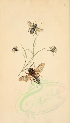 insects-03623 - 399-apis [1995x3499]