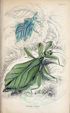 insects-05073 - 008-phyllium [1998x3209]