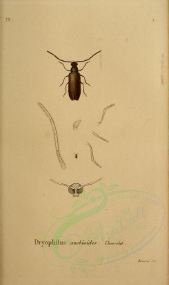 insects-05882 - 027-dryophilus [2295x3853]