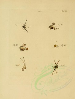 insects-06701 - 006-Insects parts [2237x2936]
