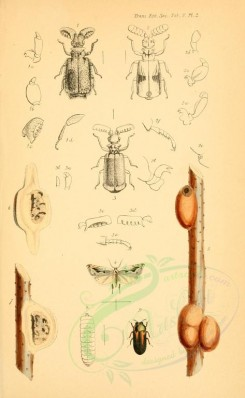 insects-09753 - 042-anchylopera, merismoderus, paussus, diphucrania [1976x3202]