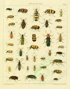 insects-10124 - 005-cerocoma [1847x2324]