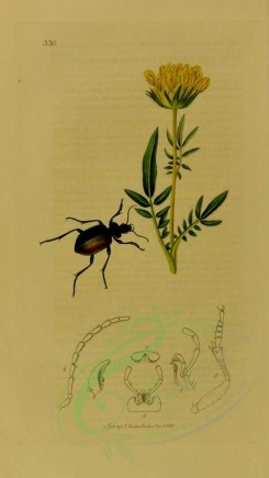 insects-11707 - 004-calosoma [1867x3307]