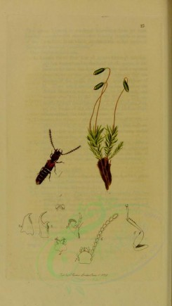 insects-11820 - 117-siagonium [1867x3307]