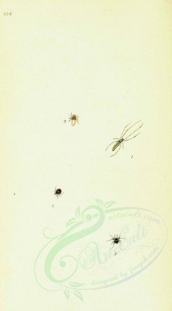 insects-11975 - 043-aranea [1742x3146]