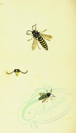 insects-12104 - 172-vespa [1797x3124]
