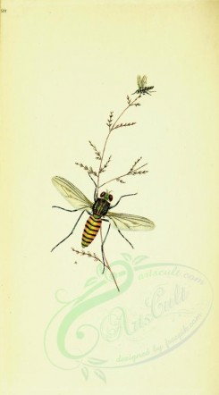 insects-12145 - 213-musca [1819x3278]