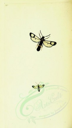 insects-12159 - 227-sphinx [1784x3143]