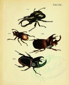 insects-12686 - 014-Beetles, Coleoptera [2447x2978]