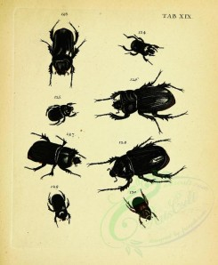 insects-12692 - 020-Beetles, Coleoptera [2447x2978]
