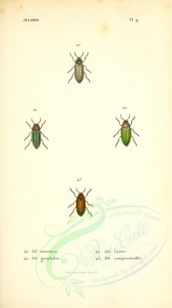 insects-14185 - 018-julodis [2505x4464]