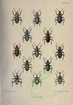 insects-14637 - sitones, gronops, limobius [2408x3442]