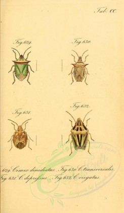 insects-14831 - 058-cimex [1803x3088]