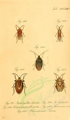 insects-14944 - 178-megarhynchus, rhaphigaster, taurocerus, placosternum [1741x2980]