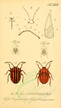 insects-15078 - 027-scutellera [1801x3182]