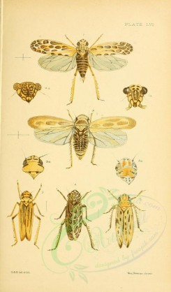 insects-16266 - 056-aphis [1925x3279]
